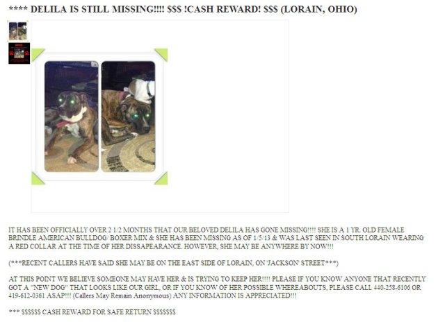 lost dog east side 2