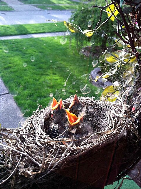 baby birds celia-4