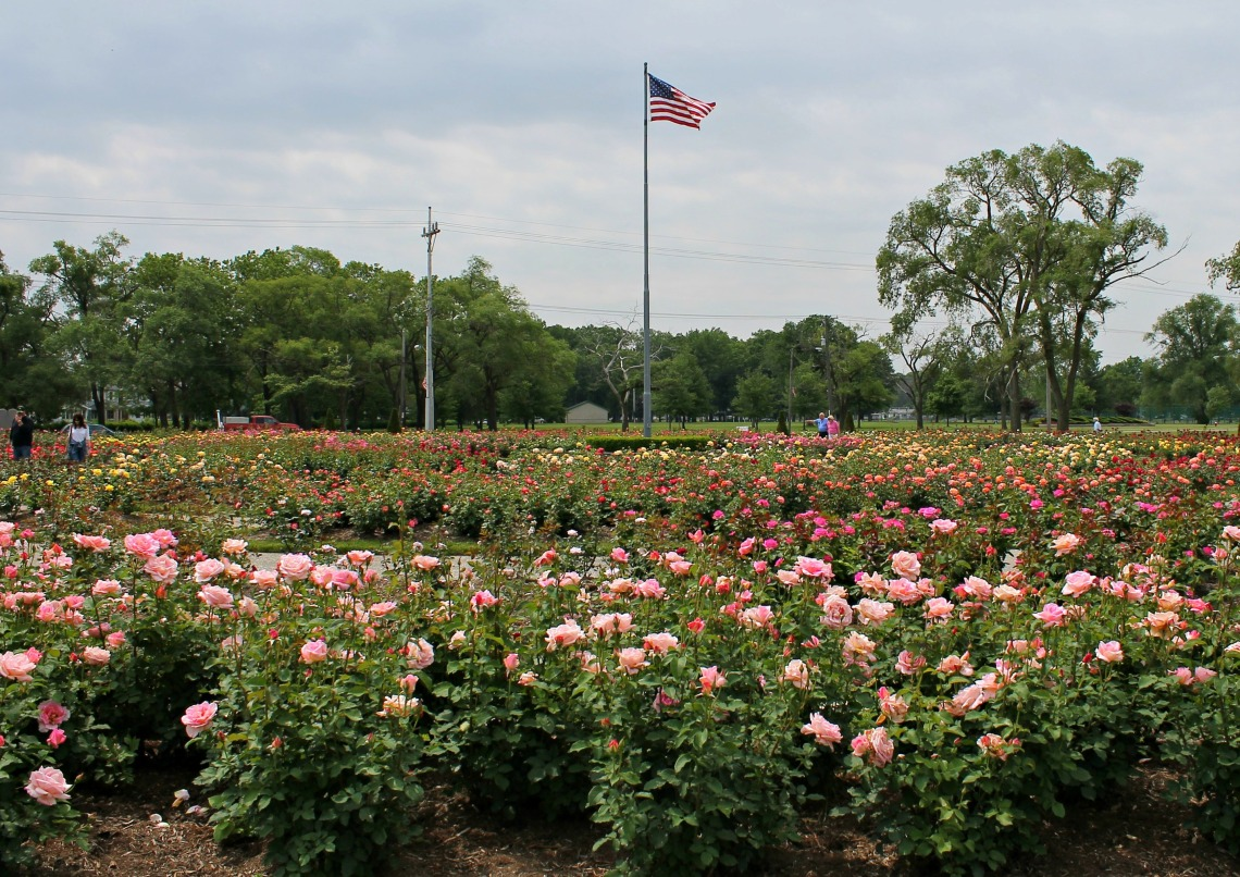 flag day lakeview rose garden