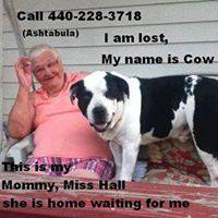 lost cow 2