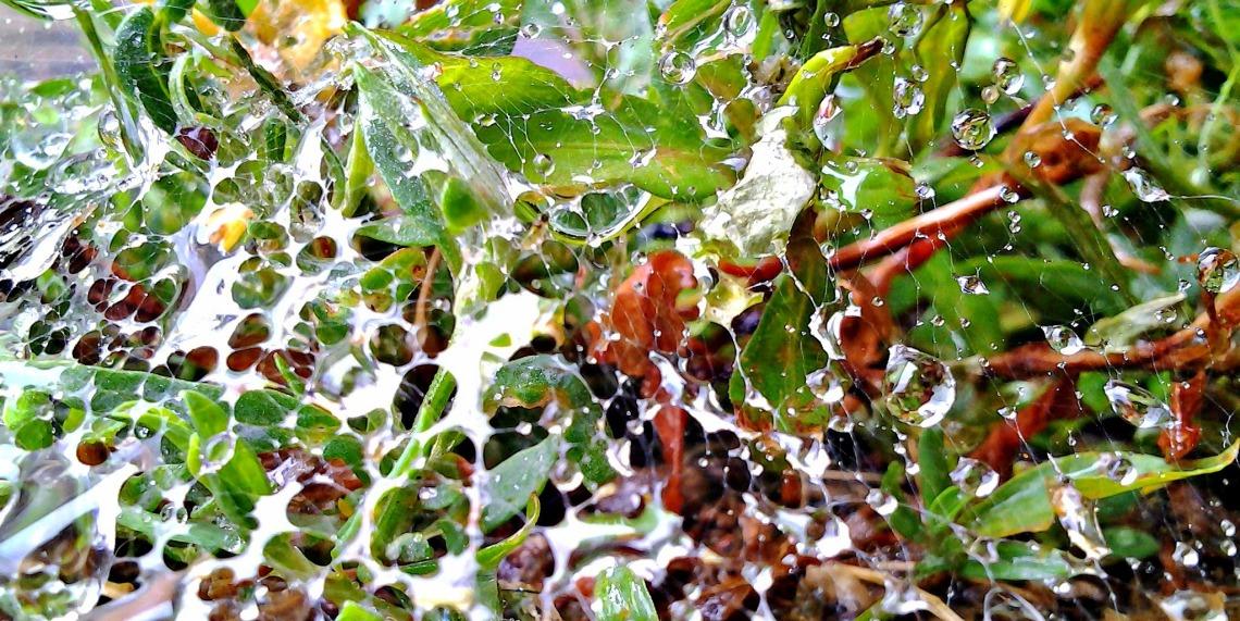 web of rain 2