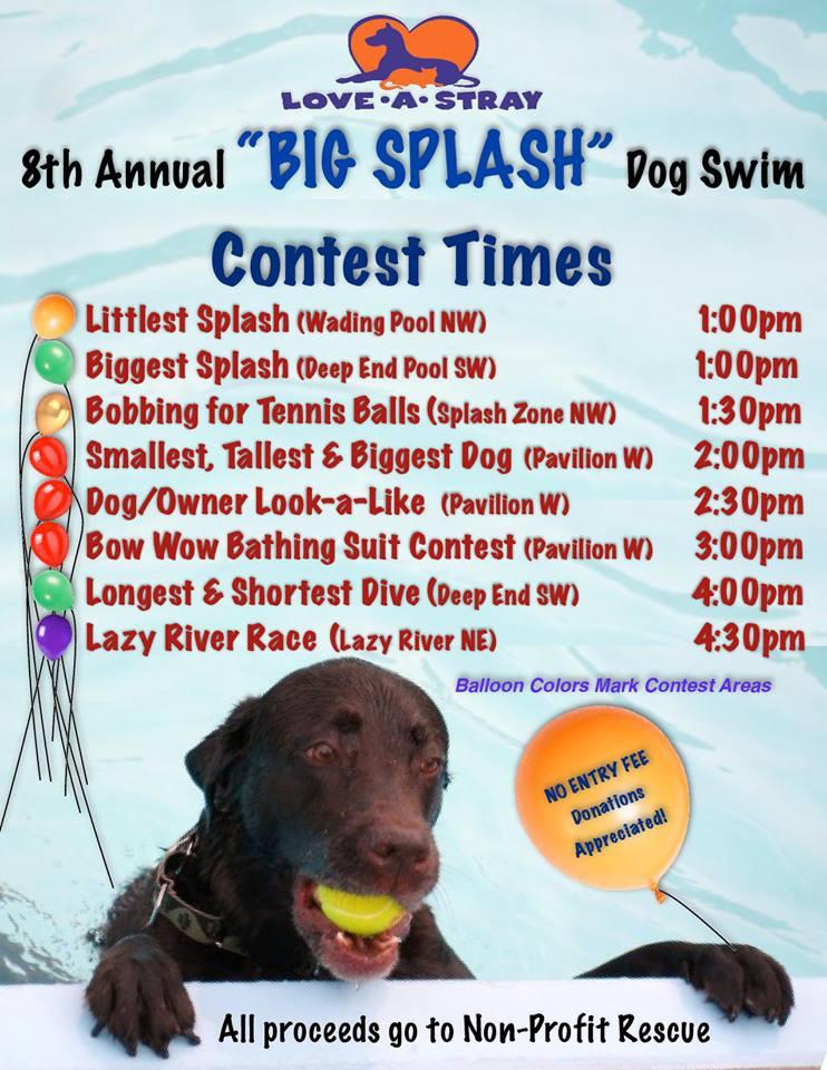 love-a-stray dog swim