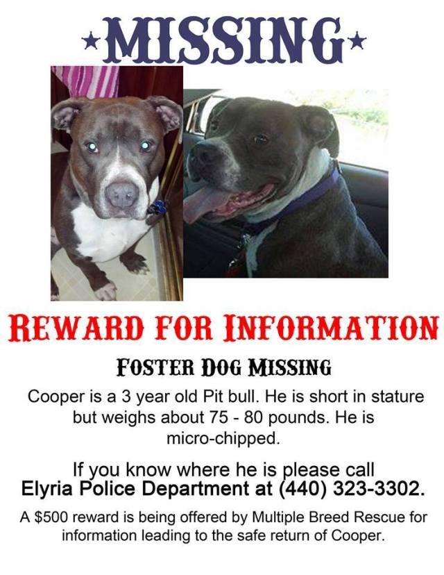 cooper missing