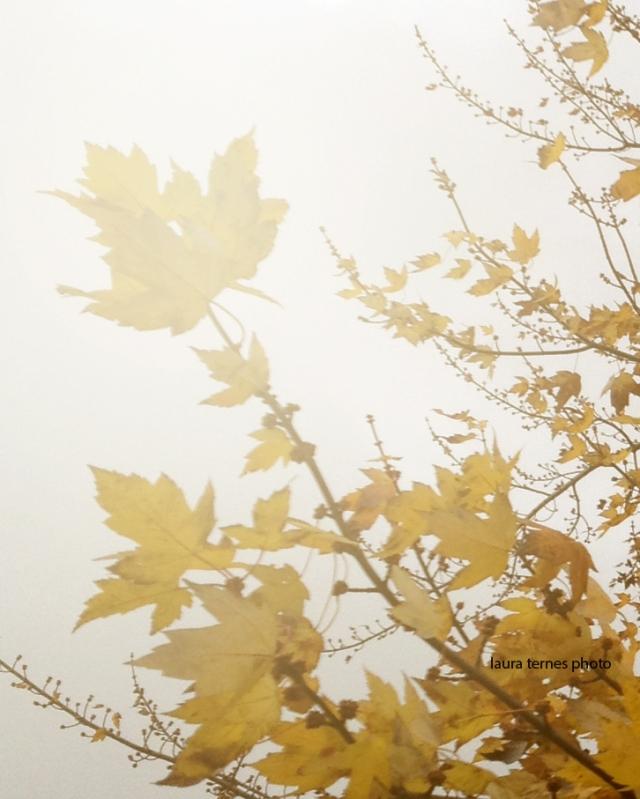 fall light