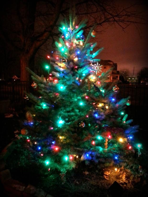 Gabes tree 2013-1
