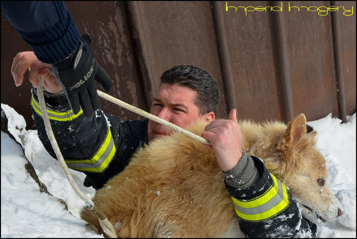 Lorain Fire Department Lt. Ben Weber rescues 13-year-old, Golden Retriever mix Maya after the dog fell between the rocks at the Spitzer Marina, Friday. The dog's owner, John Durinsky, 33, of Lorain said he was walking along the mile-long pier with his dog about 11:45 a.m., when the pooch stopped to sniff around the rocks. Maya, who suffers from peripheral vestibular disease—a nerve damaging condition of the inner ear that leads to a loss of balance—got a little too close to the edge, fell off of the pier, and became lodged between a trio of boulders. Within 10 minutes of arriving on the scene, Weber and Lorain Police officers secured the dog and returned her to her owner unharmed.