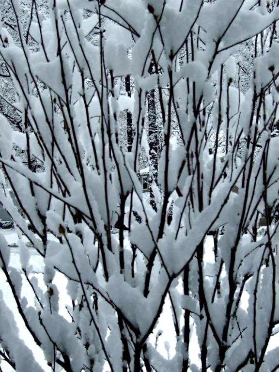 prisoner of winter