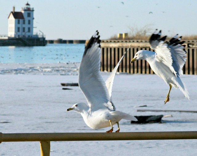 gull gymnastics