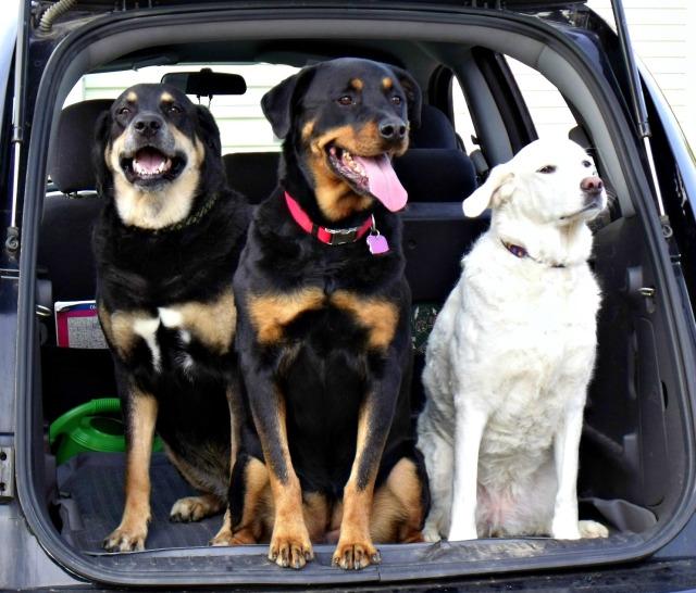 tbt dogs 070111-1