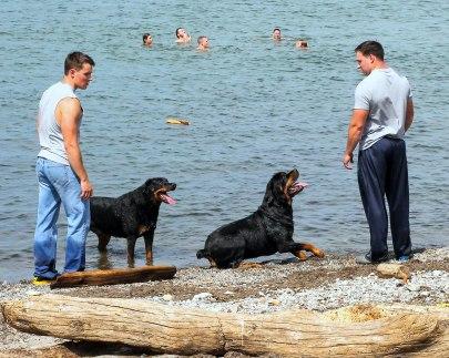 dog beach 072515