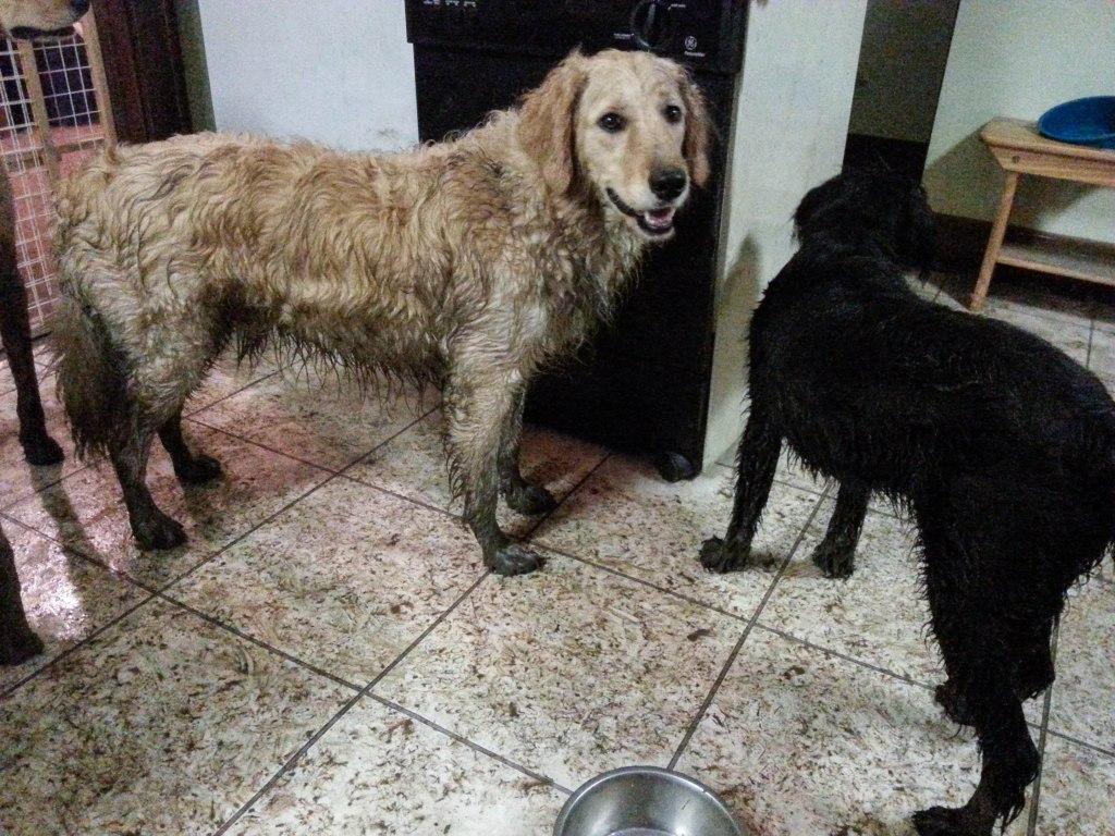 mud puppy-1