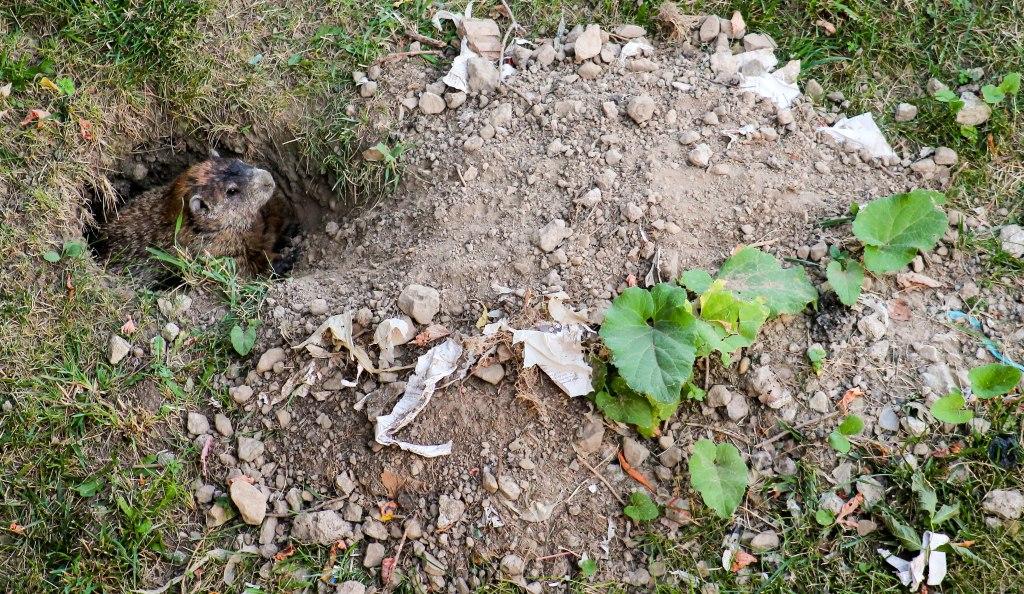 puckwudget landscaping llc