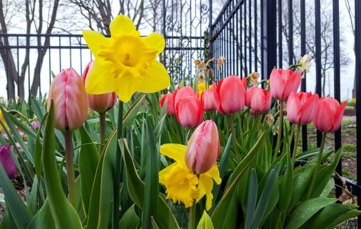 spring flowers april 2016