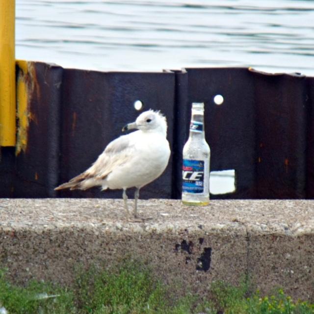 bird-and-beer-june-2011-232-1
