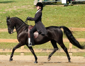 Horse Show 091017 09