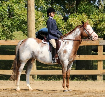 Horse Show 091017 14