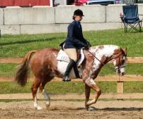 Horse Show 091017 16