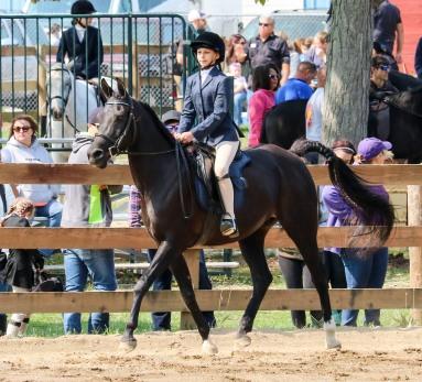 Horse Show 091017 19