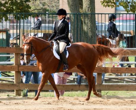 Horse Show 091017 20