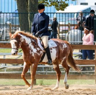 Horse Show 091017 22