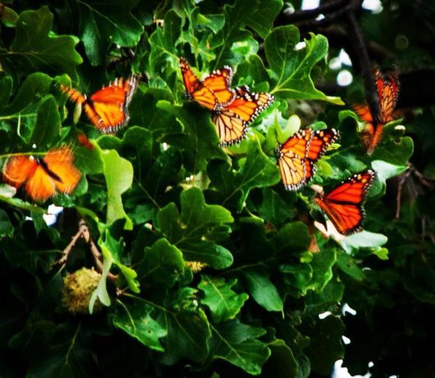 my winged friends JNavarro