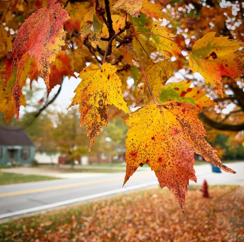 An autumn scene of green, yellow, orange, and red leaves on a tree in a neighborhood.